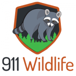 911Wildlife Removal in Kitchener